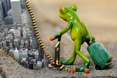 How to change your business culture - frog showing time for a change
